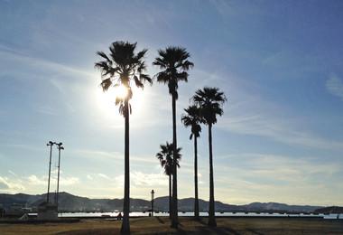 2015_tateyama_palmtree_1